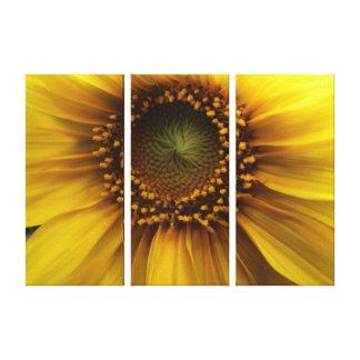 Bright Sun Canvas Print
