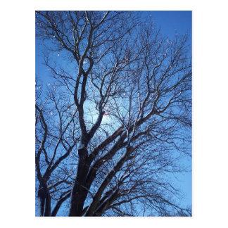 Bright Tree Postcard