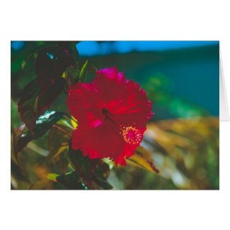 Bright Vibrant Red Tropical Hibiscus Card