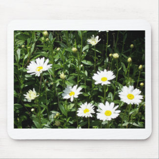 Bright White Daisys Mouse Pad