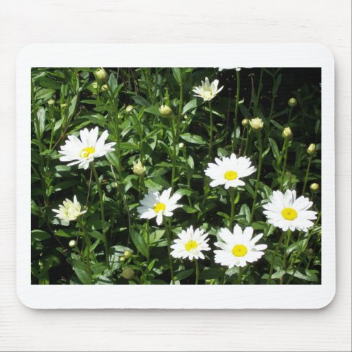 Bright, White Daisys Mouse Pad