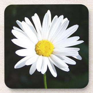 Bright White Shasta Daisy Coaster Set (6)
