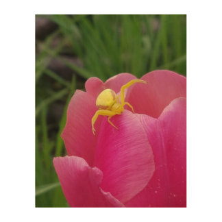 Bright Yellow Crab Spider  Pink Tulip Wood Print