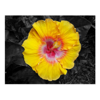 Bright Yellow Hibiscus Postcard