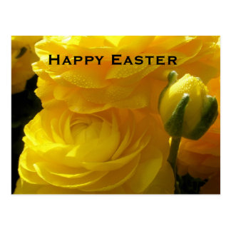 Bright Yellow Ranunculus Easter Flowers Postcards