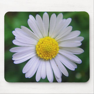 Bright yellow-white daisy mouse pads