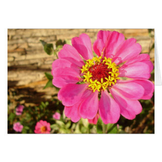 Bright Zinnia (horizontal card) Card