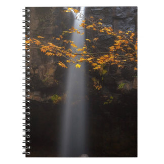Brighten Up the Place Spiral Notebook