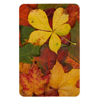 Brightly Colored Fall Leaves Magnet