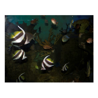 Brightly colored fish inside the tank post card