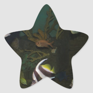 Brightly colored fish inside the tank star sticker