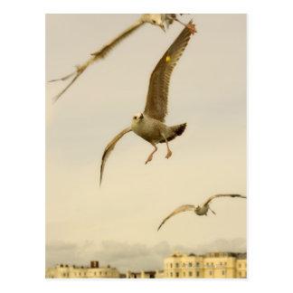 Brighton, England 2 Postcard