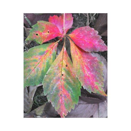 Brilliance Among the Grey - Autumn Leaf Canvas Prints