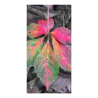Brilliance Among the Grey - Autumn Leaf Picture Card