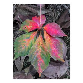 Brilliance Among the Grey - Autumn Leaf Postcard