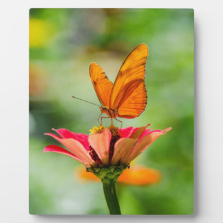 Brilliant Butterfly on Bright Orange Gerber Daisy Plaque