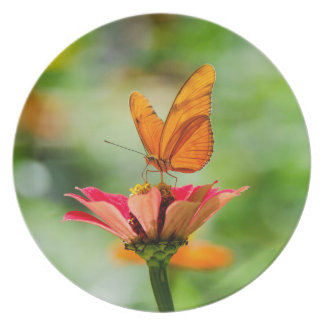 Brilliant Butterfly on Bright Orange Gerber Daisy Plate