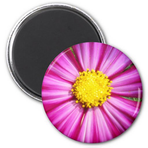 Brilliant Pink Cosmo Magnet