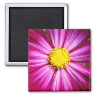 Brilliant Pink Cosmo Refrigerator Magnet