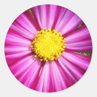 Brilliant Pink Cosmo Classic Round Sticker