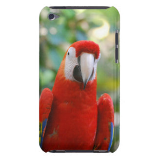 Brilliant Red Parrot  iTouch Case Barely There iPod Case