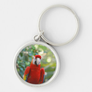 Brilliant Red Parrot Keychain