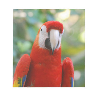 Brilliant Red Parrot  Notepad