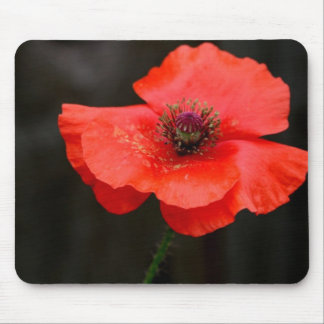 Brilliant Red Poppy Mouse Pad