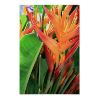 Brilliant Tropical Heliconia Florals Poster