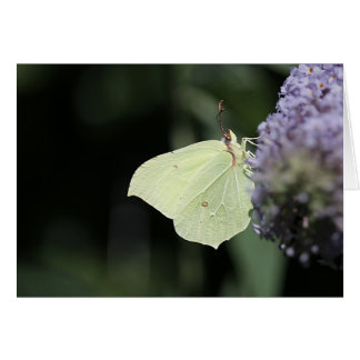 Brimstone Butterfly photo greeting card. Card