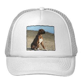 Brindle Boxer Dog hat