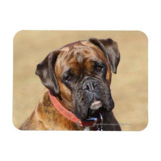 Brindle Boxer Dog Rectangular Photo Magnet