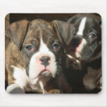 Brindle boxer pups mousepad