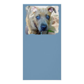Brindle Pit Bull Puppy Photo Greeting Card