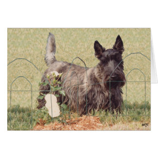 Brindle Scottish Terrier with Roses Card