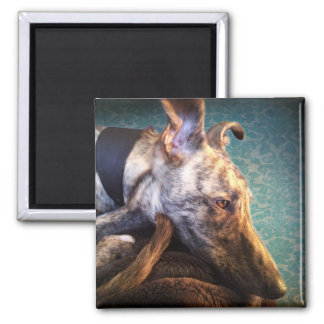 Brindled Lurcher Greyhound Square Magnet