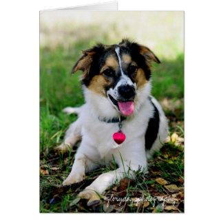 Bristol as a puppy, glorydaysphotography card