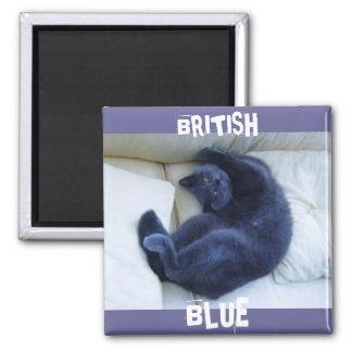 BRITISH BLUE CAT FRIDGE MAGNET