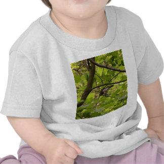 British Jay Tee Shirts