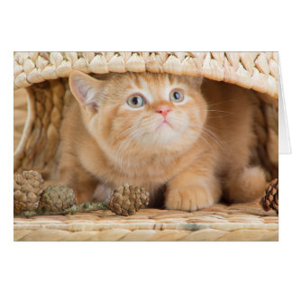 British Kitten Looking Out From Under A Basket Greeting Card