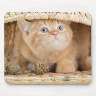 British Kitten Looking Out From Under A Basket Mouse Pad