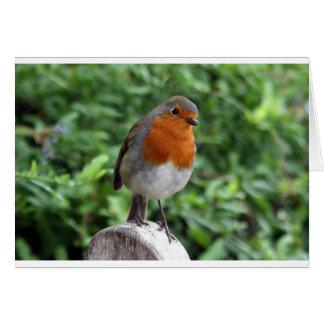 British Robin Greeting Cards