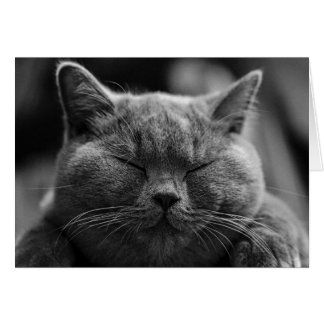 British Shorthair | Black and White | Cat Portrait Card