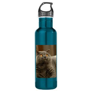 british shorthair blue 710 ml water bottle