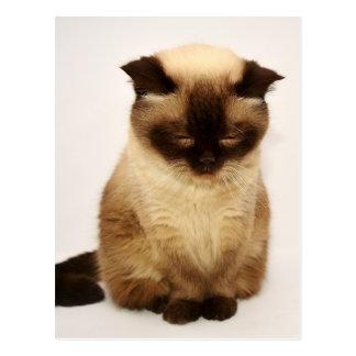 British Shorthair Cat Pet Mieze British Short Hair Postcard
