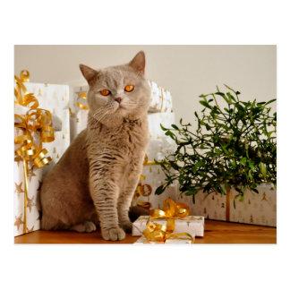 British Shorthair Cat Purr-fect Holiday Season Postcard