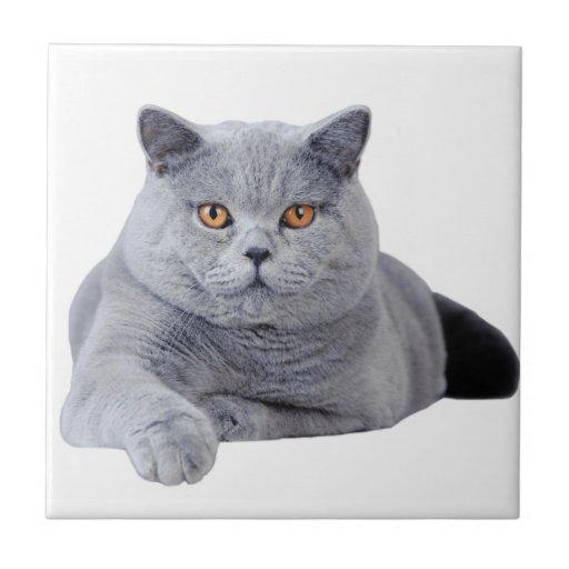 British shorthair cat tiles