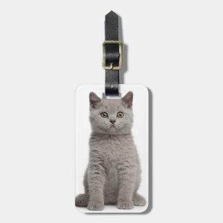 British Shorthair Kitten (10 weeks old) 2 Luggage Tag