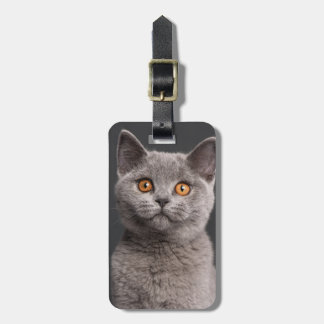 British Shorthair kitten (3 months old) Bag Tags