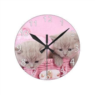 British shorthair kittens round clock